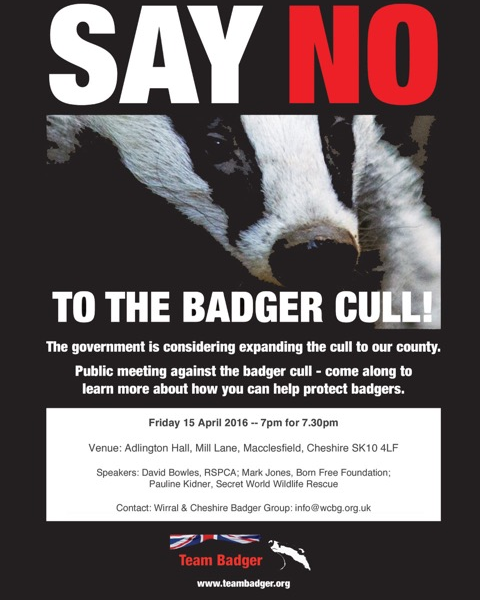 The Cheshire badger cull