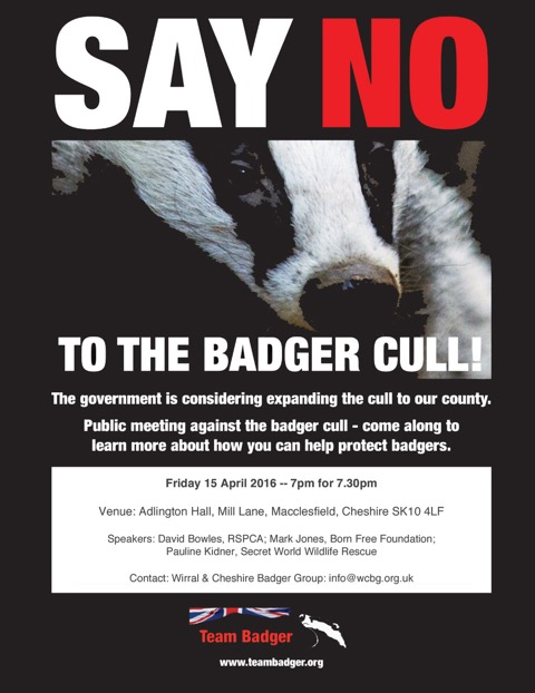 Cheshire Badger Cull